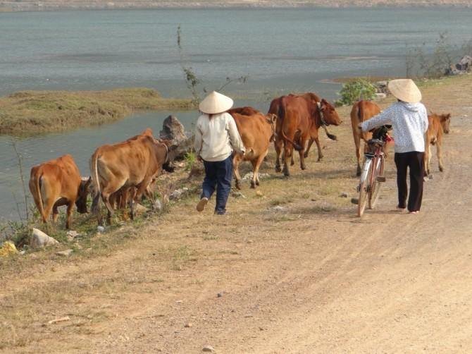 Roller-Ralley durch Ninh Binh