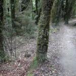 Urwald Copland Track