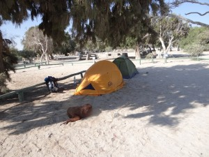 camping Bahia Inglesa