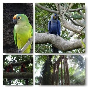 Vögel Pantanal