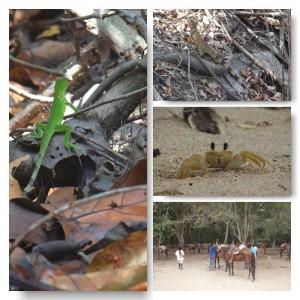 Tayrona Nationalpark Tierwelt