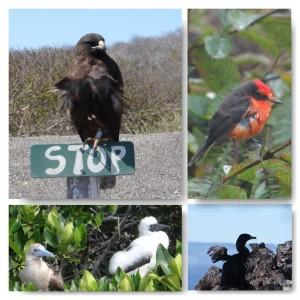 Vögel auf den Galapagos Inseln