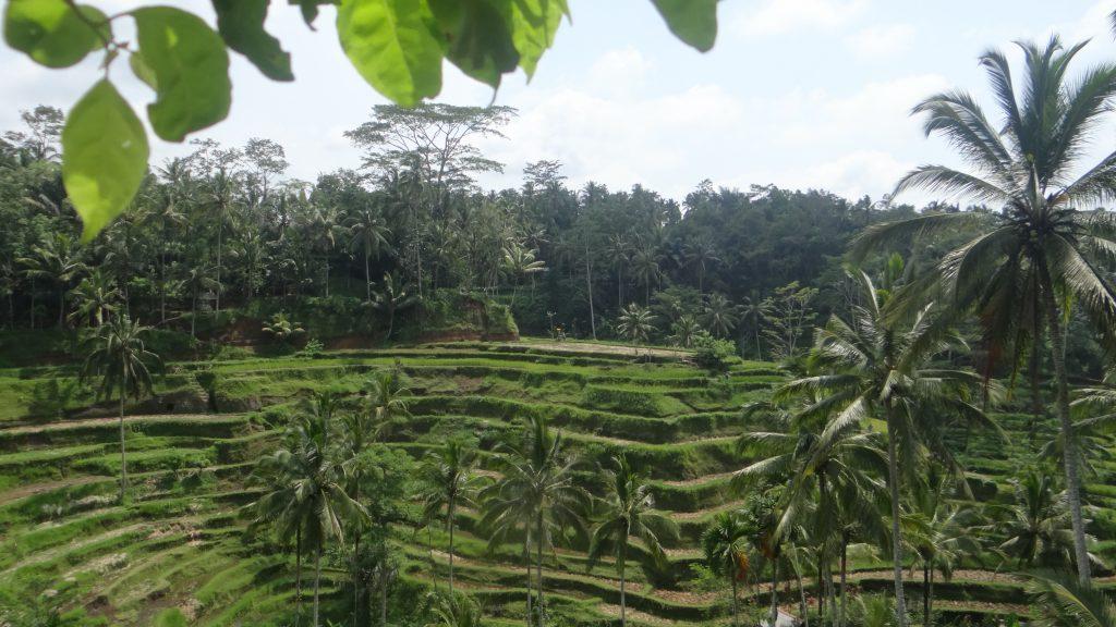 Reisterassen Bali