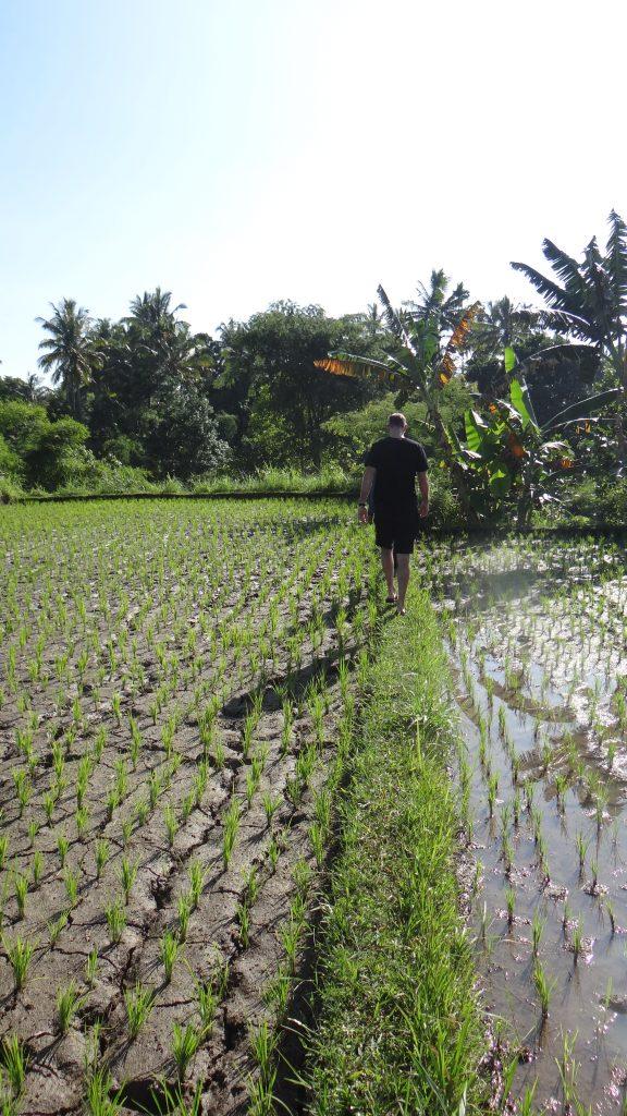 Wanderung Rinjani Reisfelder